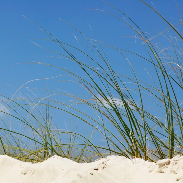 Dune Grass and Sand